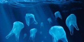 plastic bag jelly fish